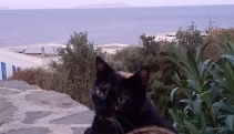 the cat and the sea